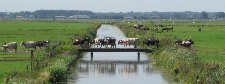 1 Bickersvaart drainage canal by Heleen Kole