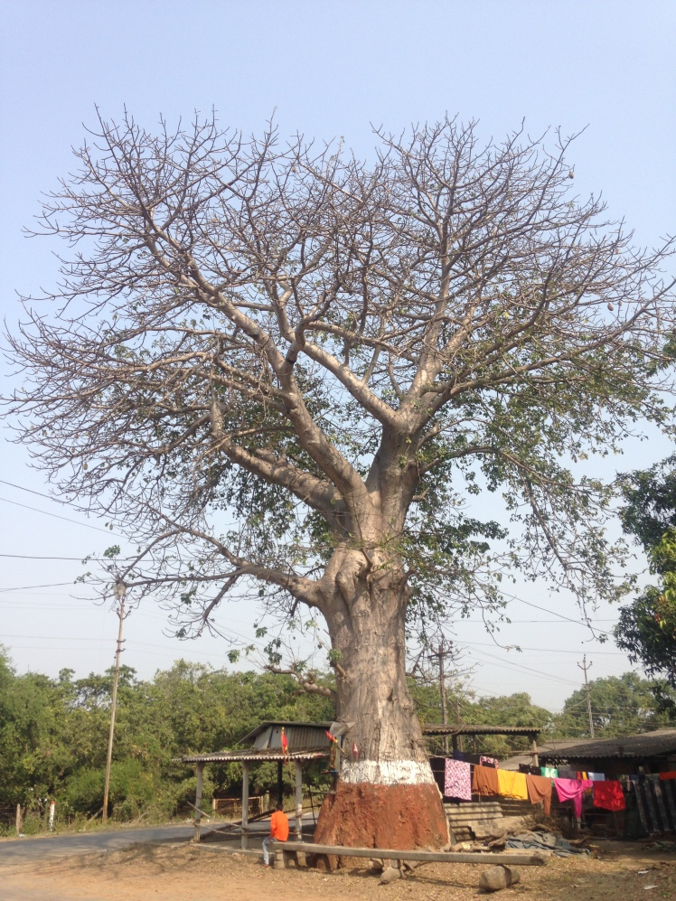 IMG_6620 Umarsadi Gujarat -courtesy Dipani Sutaria