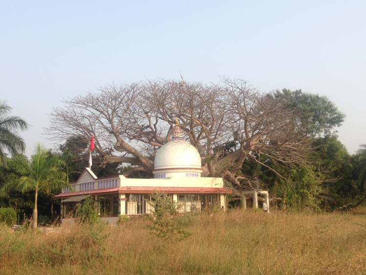 IMG_6709 Abrama-Valsad Gujarat-courtesy Dipani Sutaria