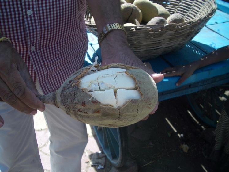 IMGP3432 Mandu Madhya Pradesh baobab fruit seller - H. Rangan