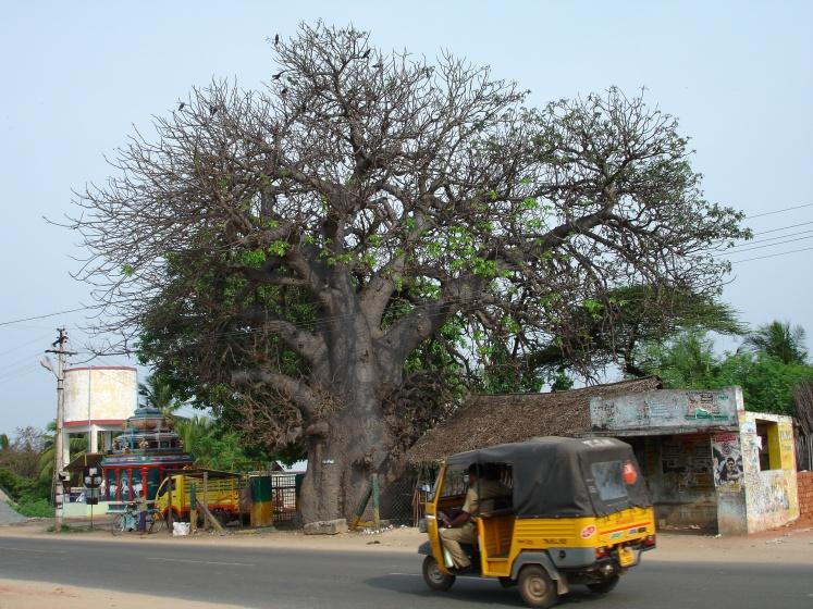 Rameswaram-Tamil Nadu - Courtesy R Ranjan