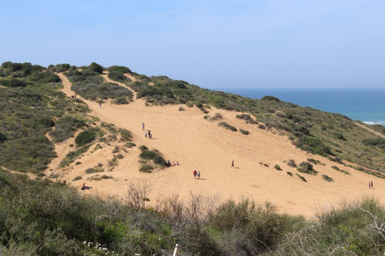 Wingate Sand Dunes in the central Mediterranean seashore, near the city of Netanya - עותק