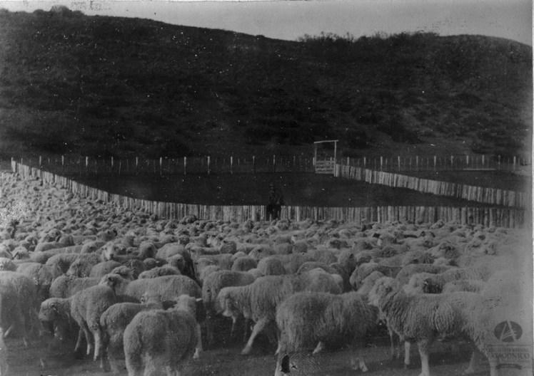 Estancia San Ramón de la Compañía Comercial y Ganadera Chile-Argentina, Foto Carlos Foresti, Ca. 1908 (Álbum Cía. Comercial y Ganadera Chile-Argentina)