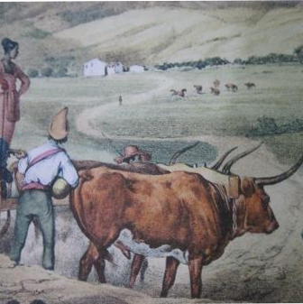 ox car RUGENDAS1835